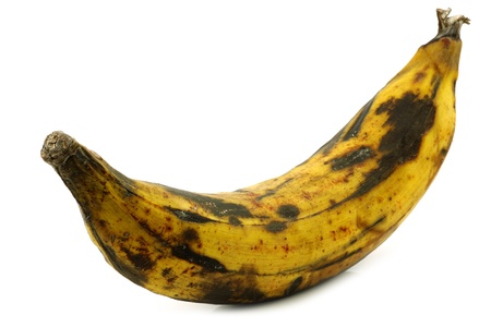 15300983 - one ripe baking banana plantain banana on a white background